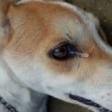 Cachorro tenta avisar os donos latindo a noite, mas ninguém ligou