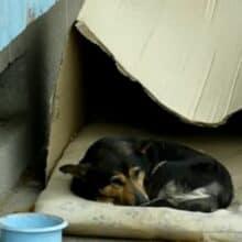 Cão de rua vivia em uma caixa de papelão foi resgatado e sua vida mudou