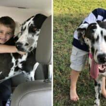 Garotinho engana os pais para adotar o maior cachorro do abrigo
