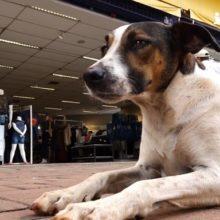 Cães de rua ganham ração, casinha e muito amor no comércio de Campo Mourão