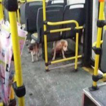 Motorista deixa cães de rua entrarem em ônibus em dia de chuva e frio