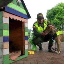 Projeto transforma Cães de rua em cães policiais na Colômbia