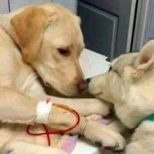Cachorrinho conforta amigo doente em clínica veterinária e faz sucesso nas redes sociais