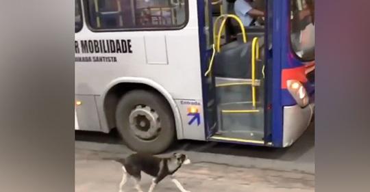 Motorista de ônibus faz uma parada todos os dias para alimentar um cachorro