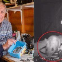 Ninguém acreditava que um rato estava arrumando sua oficina, então ele gravou