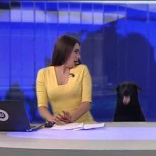 Cachorro escapa e invade telejornal ao vivo e deixa jornalista sem ação