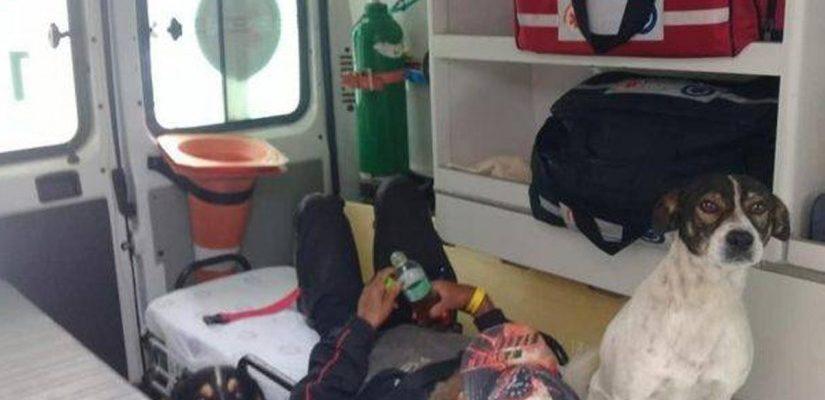 Cães expulsos da ambulância, correm atrás do veículo até UPA pra não abandonar o dono