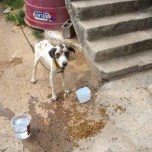 Cão que estava acorrentado é resgatado em Vila Velha – ES