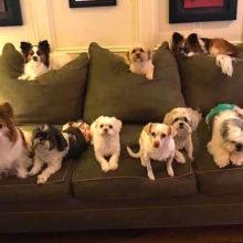 Jovem consegue reunir 11 cachorros para tirar a foto perfeita