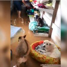 Abrigo de animais carentes alaga e cães morrem afogados em Vitória-ES