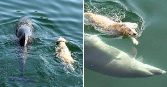 Cãozinho pula no mar todos os dias para nadar com seu amigo golfinho