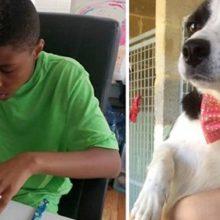 Jovem faz lindos laços para ajudar cães e gatos abandonados a serem adotados