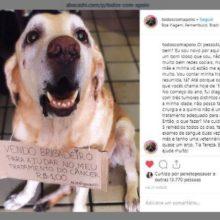 Uma campanha para ajudar o tratamento de um cachorro mobiliza internet