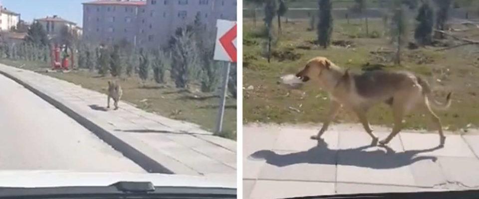 Homem vê cachorro abandonado levando tigela de comida e decide seguir ele