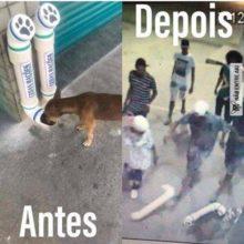 Pessoas de má fé destroem comedouros instalados para cães de rua