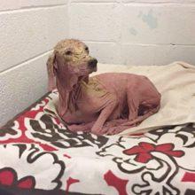 Um homem salva um cão que estava quase morrendo no deserto, um ano depois, a vê novamente e não consegue parar de chorar