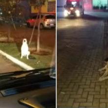 Cão perseguiu ambulância com o dono por 2,5 km até hospital