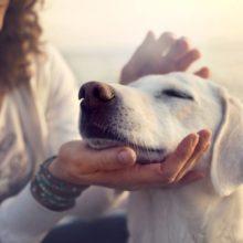 Fazer carinho em cachorros e gatos por 10 minutos já diminui os níveis de estresse