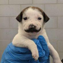 Você tem que ver esse filhote que nasceu com o bigode mais fofo do mundo