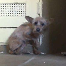 Cãozinho abandonado foi resgatado por um homem e olha o que aconteceu