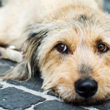 Existe preconceito com cachorros que não tem raça ou cães de rua ?