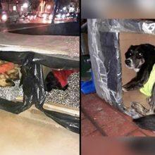 Herói anônimo fez casinhas térmicas para cães de rua resistirem ao frio