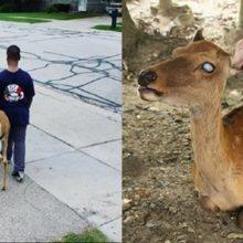 Garotinho ajuda cervo cego a procurar comida todos os dias