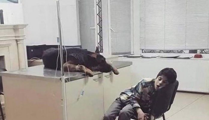 Menino passa a noite inteira ao lado de seu cão internado, verdadeira amizade!