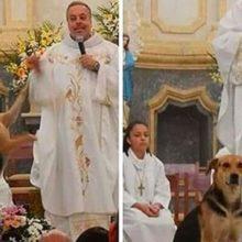 Padre resgata cães de rua e incentiva adoção durante missa