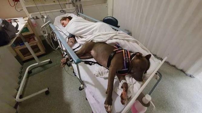 Um cachorro salva a vida da sua dona e se recusa a sair do quarto do hospital