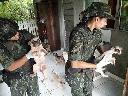 Uma mulher é multada em R$ 54 mil reais após maltratar 18 cães em SP