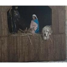 Cachorro abandonado encontrou um cantinho no presépio do lado de José e Maria