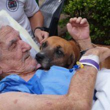 Cachorro chora todos os dias e só parou quando foi levado para visitar dono de 86 anos em hospital