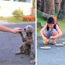 Garoto de 9 anos usa suas economias para alimentar cães de rua