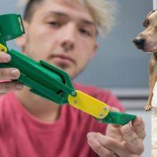 Jovem de 18 anos cria próteses para cães deficientes e ajuda eles a terem uma nova vida