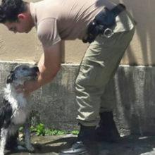 Policial dá banho em cachorro que desmaiou de calor nas ruas de Joinville