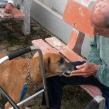 Projeto utiliza cachorros de rua para ajudar na terapia de idosos abandonados em asilos