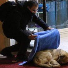 Um dentista passa as noites cobrindo cães de rua com cobertores durante o inverno