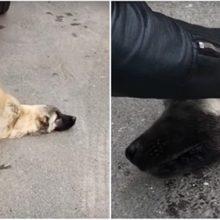 Um homem salva um cachorro que estava perto de morrer após ser atropelado