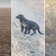 Cachorro que estava desaparecido volta pra casa com outro cão e um bode