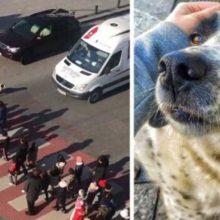 Cão de rua ajudou um grupo de crianças que queriam atravessar a rua
