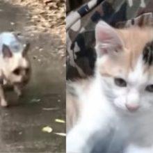 Emocionante cachorro salva gatinho abandonado da chuva e leva para casa