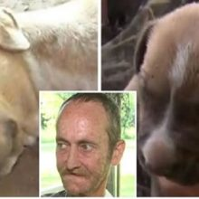 Homem com câncer terminal faz apelo antes de morrer para que seus cães sejam adotados