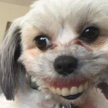 Homem perde dentaduras, olha debaixo da mesa e vê cão com um novo sorriso