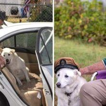 Idoso de 93 anos adota cachorro idoso que ia ser sacrificado