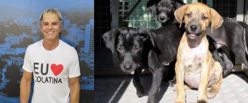 Prefeito cancela carnaval para construir canil para cães abandonados