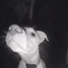Um cachorro toca a campainha após ficar trancado para fora de casa