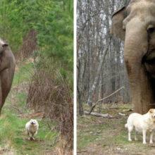 A história de Bella e Tarra, um elefante e um cão de rua que eram grandes amigos