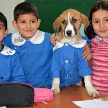 Cachorrinho resgatado vai para as aulas com uniforme escolar e ajuda seus colegas de classe a aprender