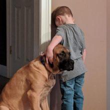 Cão fica consolando criança de 3 anos o tempo todo e a foto faz sucesso na internet